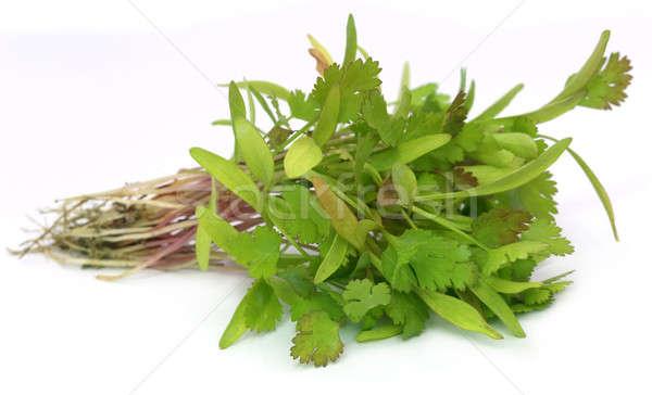 Bunch of coriander seedling Stock photo © bdspn