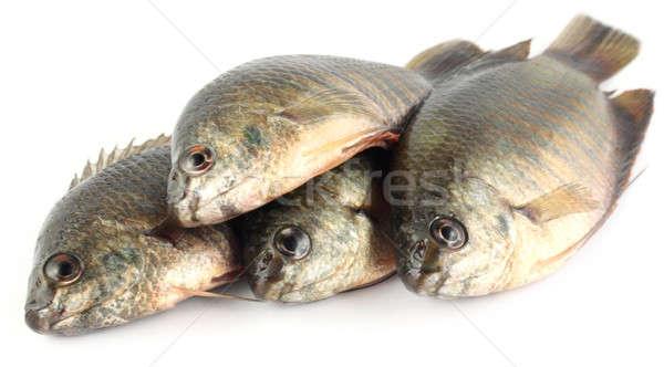 Meridional Asia blanco agua peces rojo Foto stock © bdspn