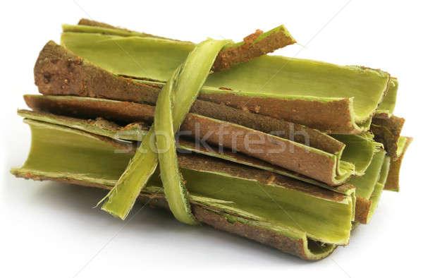 ツリー 樹皮 自然 背景 皮膚 熱帯 ストックフォト © bdspn