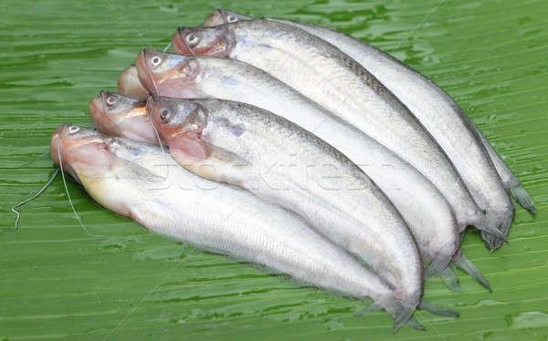 Tatlısu balık güneydoğu asya yeşil yaprak arka plan akşam yemeği Stok fotoğraf © bdspn