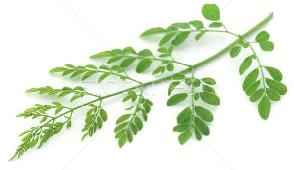съедобный листьев белый зеленый растительное свежие Сток-фото © bdspn