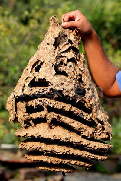 Hornet nest Stock photo © bdspn