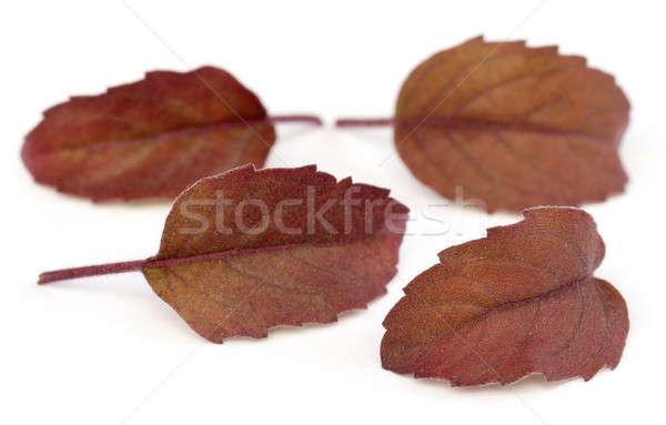 Kırmızı yaprakları beyaz tıbbi doğa Stok fotoğraf © bdspn