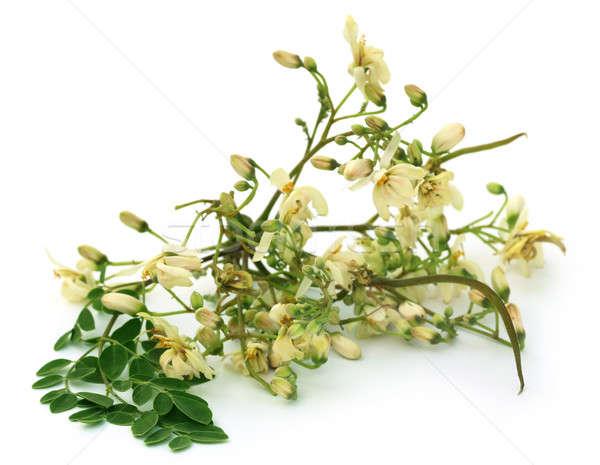Comestível flor folhas verdes branco verde fresco Foto stock © bdspn