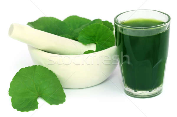 Medicinal thankuni leaves of Indian subcontinent with extract Stock photo © bdspn