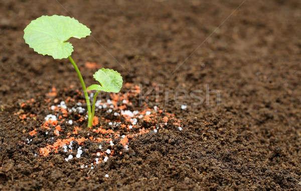 Planta terreno químico fertilizante folha Foto stock © bdspn