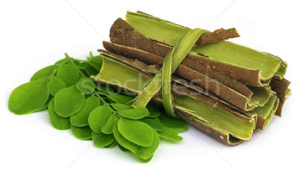 Levelek ugatás fehér zöld bőr friss Stock fotó © bdspn