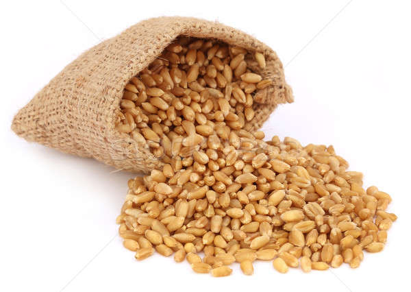 Wheat in a sack bag Stock photo © bdspn