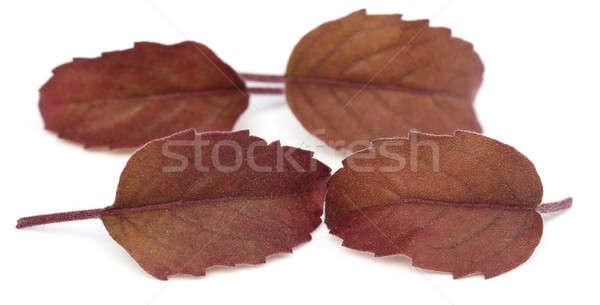 赤 葉 白 医療 自然 ストックフォト © bdspn