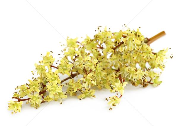 Henna virág fehér természet test levél Stock fotó © bdspn