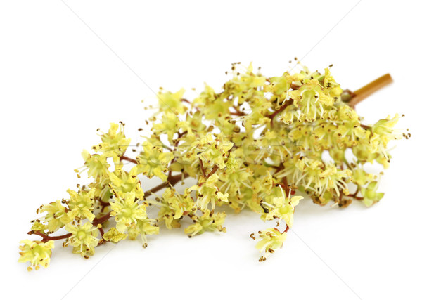 Henna flower Stock photo © bdspn
