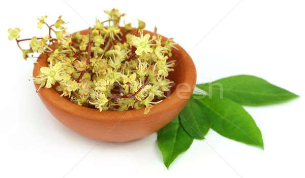 Henna levelek virág cserépedények természet bőr Stock fotó © bdspn
