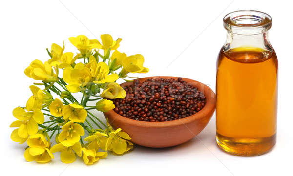 Mustard flowers, seeds and oil Stock photo © bdspn