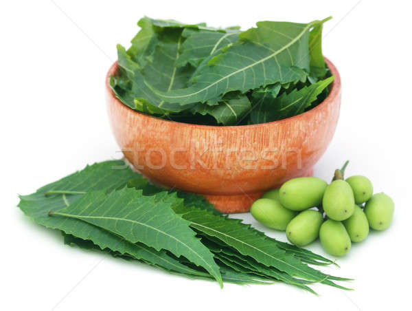 Medicinal neem fruits with leaves in a bowl Stock photo © bdspn