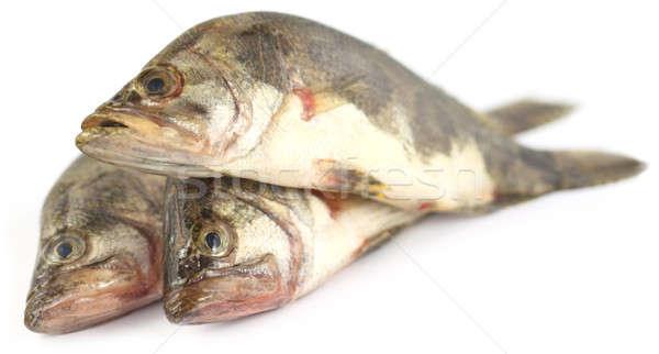 Mottled Nandus or veda fishes Stock photo © bdspn