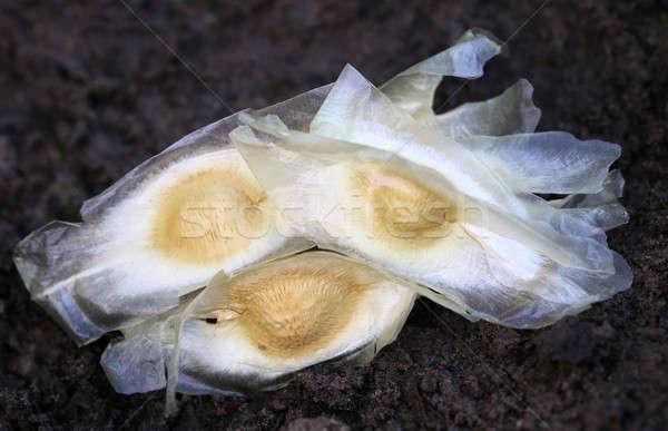 種子 肥沃な 土壌 黒 野菜 シード ストックフォト © bdspn