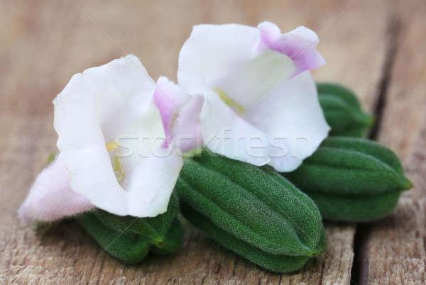 зеленый кунжут цветок поверхность цветы Сток-фото © bdspn