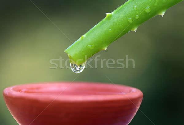Fallen Aloe braun Schüssel Blatt Schönheit Stock foto © bdspn
