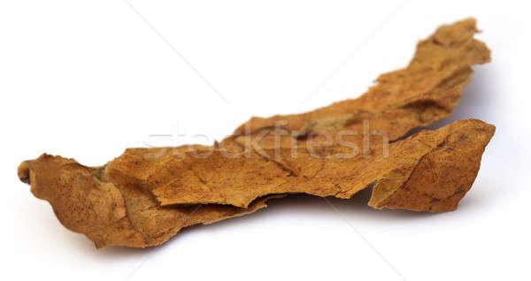 Gedroogd tabak blad witte natuur gezondheid Stockfoto © bdspn