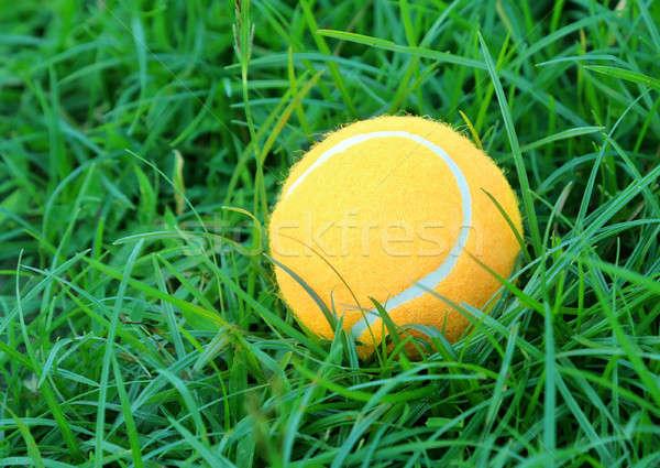 Tennisbal groen gras oppervlak gras sport groene Stockfoto © bdspn