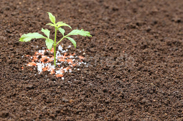 Ayurvedic Nishinda plant with chemical fertilizer Stock photo © bdspn