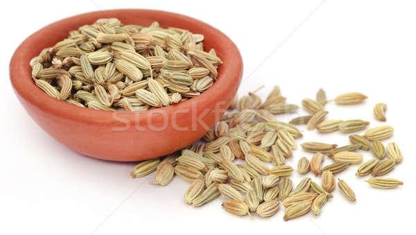Hinojo semillas cerámica blanco alimentos cocina Foto stock © bdspn