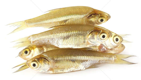 Amblypharyngodon mola fish of Southeast Asia Stock photo © bdspn