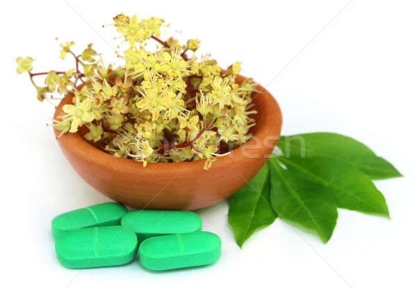 Henna leaves with flower and tablets Stock photo © bdspn