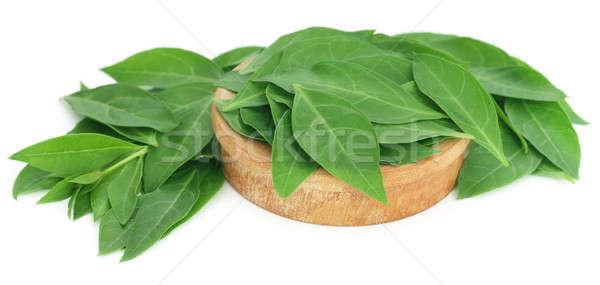 Henna bladeren houten kom witte lichaam Stockfoto © bdspn