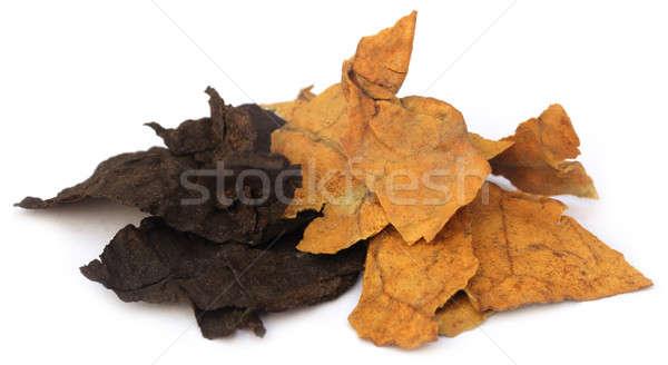 Secado tabaco hojas blanco textura hoja Foto stock © bdspn