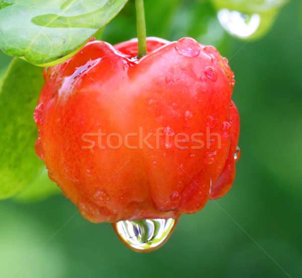 Cherry fruit Stock photo © bdspn