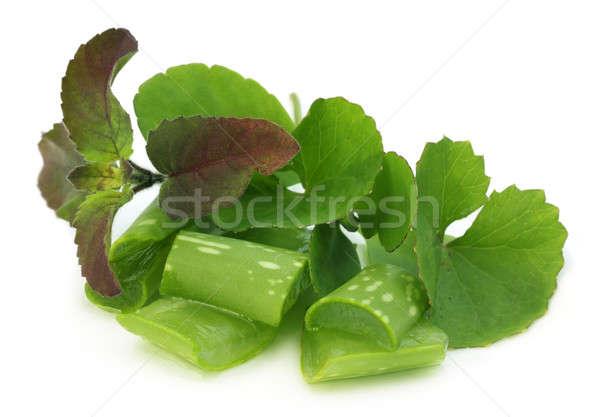 Medicinal herbs Stock photo © bdspn