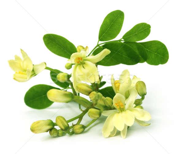 Ehető virág fehér fa étel természet Stock fotó © bdspn