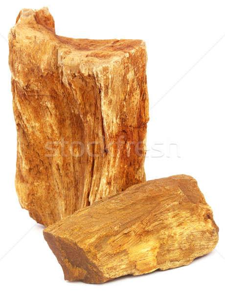 Piezas fósil rock blanco poder estructura Foto stock © bdspn