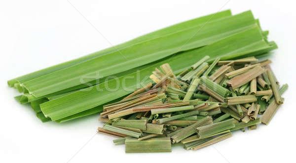 Herbe usine tropicales Asie légumes fraîches Photo stock © bdspn