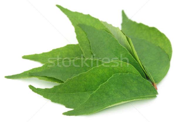 étriller laisse blanche arbre alimentaire vert Photo stock © bdspn