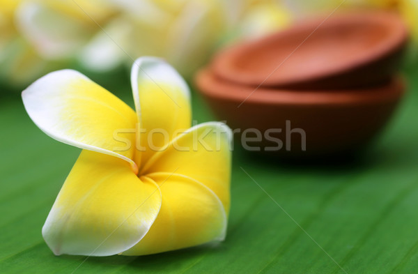 Frangipani on green leaf Stock photo © bdspn