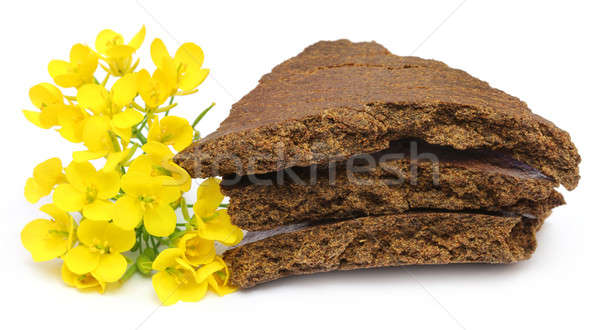 Mustard flowers and cake over white background Stock photo © bdspn