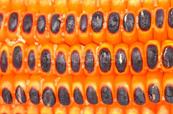 Sült sózott kukorica reggeli édes egészséges Stock fotó © bdspn