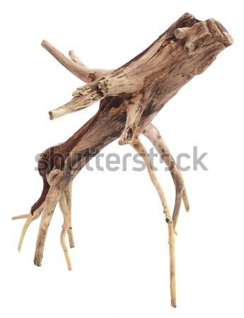 Driftwood biały drewna charakter projektu oddziału Zdjęcia stock © bdspn