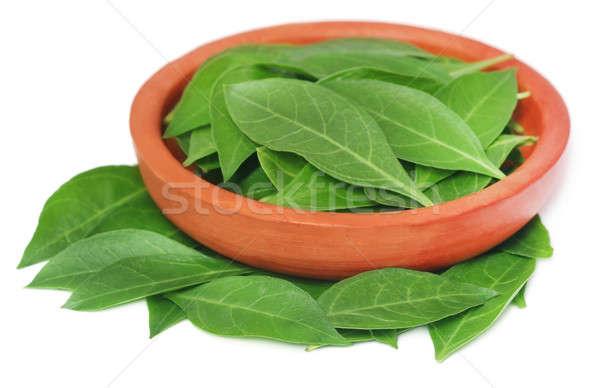 Henna levelek cserépedények természet zöld folt Stock fotó © bdspn