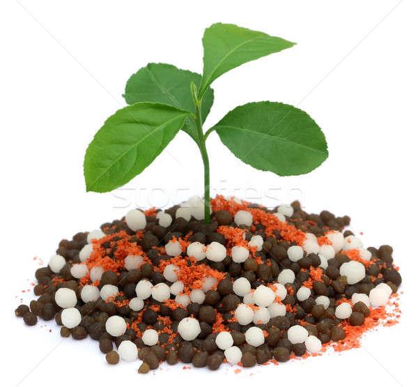 Citrom növény növekvő vegyi műtrágya fehér Stock fotó © bdspn