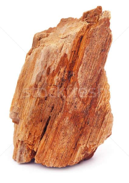 Fóssil rocha branco poder estrutura cortar Foto stock © bdspn