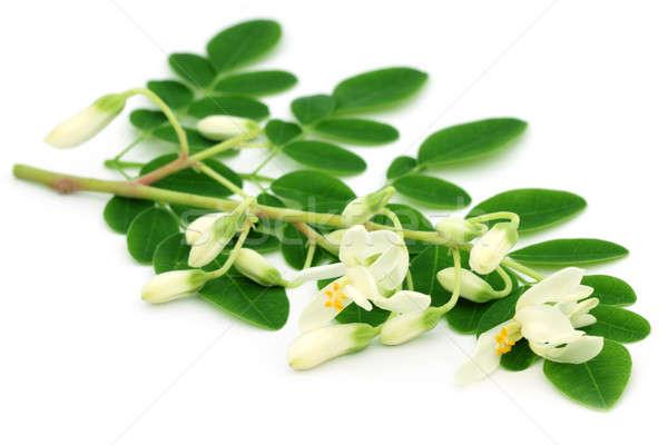 Comestible flor hojas blanco árbol alimentos Foto stock © bdspn