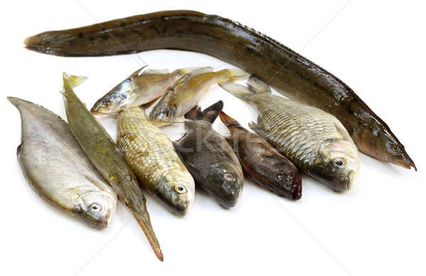 South Asian fishes Stock photo © bdspn