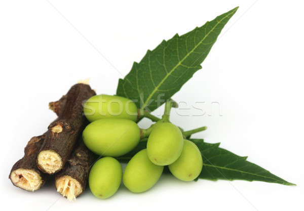 Medicinal neem fruits with twigs Stock photo © bdspn