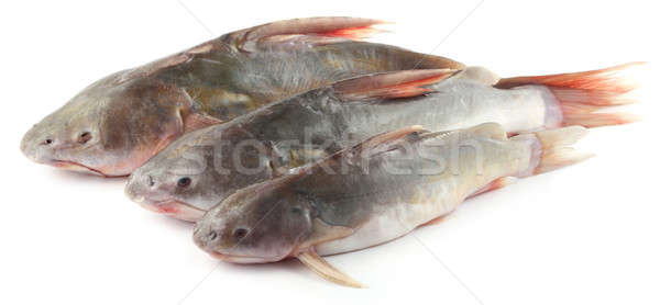 Bangladesh branco comida rio saudável Foto stock © bdspn