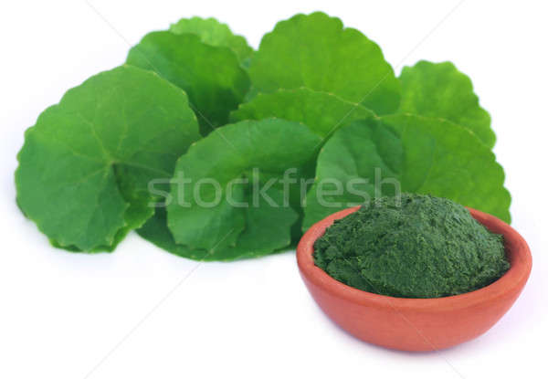 Medicinal thankuni leaves, fresh and crushed Stock photo © bdspn