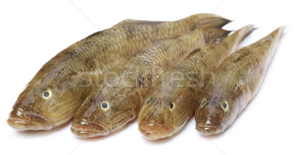 Réservoir populaire poissons sous-continent indien blanche alimentaire Photo stock © bdspn