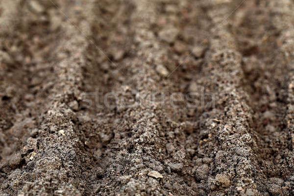 Megművelt föld csetepaté ültet palánták kert Stock fotó © bdspn
